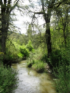 Coyote Creek photo